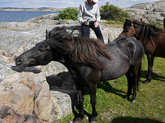 Horses (Pivi ) Tags: island bohusln sweden summer holiday paddling kayak swedishcoast june2016 john rock horse