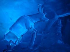 DSC00595 (DeeGe7) Tags: abstract ice switzerland klein frost suisse frosty glacier cave zermatt matterhorn icy grotte glace givre abstrait glacé lumire givré petitcervin glaceglace