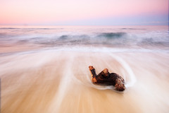 Driftin' Along (Matthew Post) Tags: ocean longexposure seascape soft waves post matthew wave australia driftwood queensland sunshinecoast mooloolaba breakingwaves maroochy cottontree maroochydore alexandraheadland matthewpost