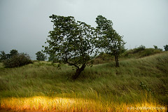 A storm from the west (josefrancisco.salgado) Tags: usa storm tree verde green grass us flora nikon michigan unitedstatesofamerica rbol tormenta nikkor bentonharbor d4 2470mmf28g jeanklockpark