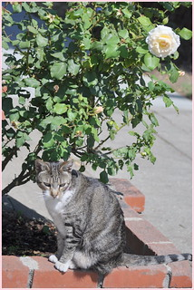 Miao.. LORD...Take My Rose ....And Give Me A Home >>Please........Miao...Miao..