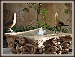 (John Goulart Jr., Art and Travel Photography) Tags: arizona fountain phoenix birds oasis jgou theroyalpalmsresortandspa