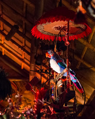 Avian MC (Peter E. Lee) Tags: summer umbrella stand orlando unitedstates florida pierre feathers parrot disney fl wdw waltdisneyworld themepark magickingdom 2012 tikiroom darkride audioanimatronic waltdisneysenchantedtikiroom