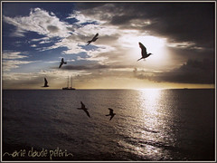 MAGICAL ( Roscoff ,Brittany _France) (Maclo) Tags: light sea sky seascape nature birds skyline clouds boat poetry roscoff canonpowershota650is maclo