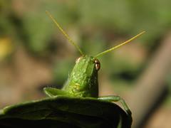 Bom Dia!!! (Ricardo Venerando) Tags: life macro green nature brasil garden insect natureza olympus bugs explore abc discovery soe naturesfinest nationalgeografic platinumphoto abcpaulista diamondclassphotographer ysplix grandeabc goldstaraward fotocultura ricardovenerando