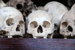 Killing Fields Skulls (Benicio Murray) Tags: travel canon skulls thailand rouge death memorial cambodia khmer killing vietnam memory fields 5dmkii