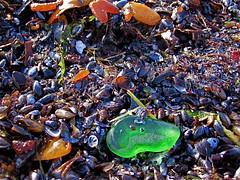 Havsglas Sverige 005 (Havsglas Sverige) Tags: sverige seaglass strandglas havsglas