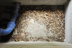 (Flavio Piffer) Tags: abstract foglie concrete grey leaf grigio empty dry ps holes cemento astratto buco montagna tubo emptiness buchi bolzano secco vuoto paura conduttura tuboblu ilvuoto