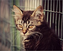 Sweet little Kitty  (Viola & Cats =^..^=) Tags: cats pets animals kittens felini felines animali gattini gatii mygearandme mygearandmepremium mygearandmebronze mygearandmesilver mygearandmegold mygearandmeplatinum