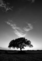 l'albero al tramonto antico (invitojazz) Tags: sunset italy tree backlight nikon italia tramonto albero puglia controluce d90 invitojazz vitopaladini