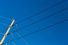 6I6B0307 (alexdotbarber) Tags: birds wire pole 85mmf12lii canon5dmkiii