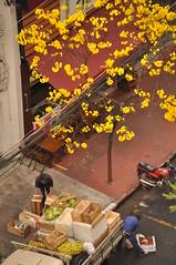 Ip Amarelo (Aline Izabel) Tags: sopaulo sp calada laranjas ipamarelo ruadaconsolao caixotes