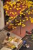 Ipê Amarelo (Aline Izabel) Tags: sãopaulo sp calçada laranjas ipêamarelo ruadaconsolação caixotes