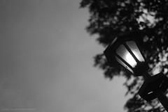 Dim Light (itsuryel) Tags: park blackandwhite stilllife photography nikon philippines