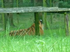 """Longleat Safari Park • <a style=""""font-size:0.8em;"""" href=""""http://www.flickr.com/photos/81195048@N05/8017674382/"""" target=""""_blank"""">View on Flickr</a>"""