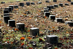 Small Gravestones (95wombat) Tags: old psychiatric hospital spiral cemetery delaware farnhurst newcastle