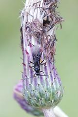 Wasp (Henri Koskinen) Tags: pistiinen wasp uutela helsinki finland 26082016