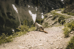 (kendall.plant) Tags: nature outdoors hiking explore hike backpacking trees green montana national park mountains moody fade sony a7