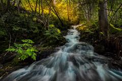 Stream (strupert) Tags: rapids acer birch forest 1424mm nikon longexposure longshutter sunglow river autumn stream trndelag trondheim norway