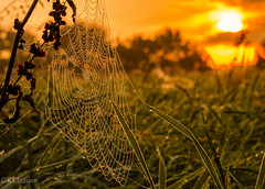 Sunrise_Spider web (ostfriese77) Tags: sunrise sunset spider web morning 50mm 18 nature outdoor landscape beautiful spinnennetz morgentau nikon d5100 aurich landschaft sonnenaufgang sonnenuntergang ostfriesland deutschland germany