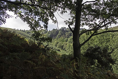 A Hidden Valley (me'nthedogs) Tags: valley leyhill horner exmoor somerset
