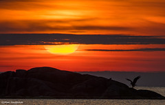 The sea eagle and the crow (- Man from the North -) Tags: sundown sunset evening birds dramaticsky sky westcoast finland ostrobothnia nikond500 tamron150600mmf563spvcusd nikon tamron wildlife finnishwildlife nature naturephotography clouds cloudy seaeagle crow landscape scene