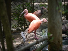 P2230404 (Gareth's Pix) Tags: aviarionacionaldecolombia baru colombia aviario bird