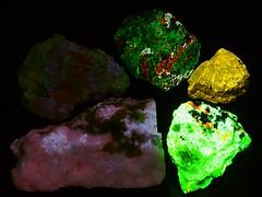 Fluorescent Mineral Group 3 -  UVc (someHerrings) Tags: zircon calcite aragonite willemite hackmanite powellite