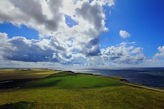 perspicacity (D.Reichardt) Tags: blue summer sky nature clouds landscape denmark europe cows fine wideangle clear vision northsea grenn perspicacity bovbjerg