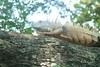 IMG_3551 (rafaelgastelum) Tags: familia moda playa panteon iguanas reptiles sayulita losmuertos sanpancho garrobo