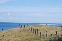 Hek in de duinen (Jan van den Berg) Tags: vuurtoren texel paal30