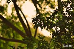 Green (Daban Ameen) Tags: she light sunset portrait mountain inspiration abstract macro reflection green art nature grass fashion night vintage creativity photography gold golden nikon europe flickr day dof emotion bokeh iraq lifestyle tiny passion he erbil kurdistan arbil dabo kurd ameen daban hawler slemani d5000 dabos