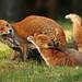 Foxes Notts WT (cpt Jon Hawkins)
