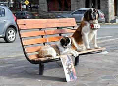 Eles existem! (renataml) Tags: vacation argentina buenosaires banco frias cachorro praa inverno frio bariloche rionegro sobernando