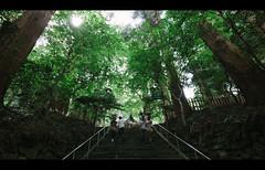 Pilgrimage. (Crusade.) Tags: travel green japan forest canon shift miyazaki 17 dslr tilt ts tse takachiho 5d2