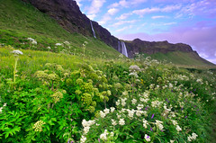 Seljalandsfoss Morning View (David Shield Photography) Tags: travel flowers color nature sunrise landscape morninglight waterfall iceland nikon explore valley greenery grad explored singhray davidshield