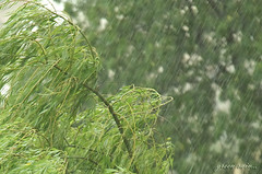 Green rain (avskrc) Tags: tree green rain yeil aa yamur yildizli dpsgreen