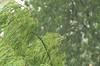 Green rain (avskrc) Tags: tree green rain yeşil ağaç yağmur yildizli dpsgreen