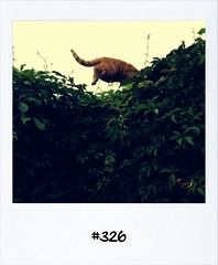 """#DailyPolaroid of 19-8-12 #326 • <a style=""""font-size:0.8em;"""" href=""""http://www.flickr.com/photos/47939785@N05/7843319050/"""" target=""""_blank"""">View on Flickr</a>"""