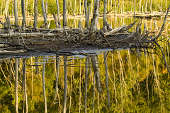 Heron pond (beckstei) Tags: sunset white lake reflection bird heron nature pond michigan wildlife annarbor waterbird utata wading