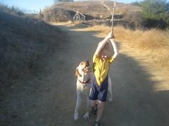 7915343088 d1d4ae6883 m Hercules, Photos of my fun Yellow Labrador