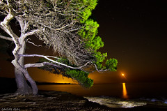 mi pino en La Ampolla (navarrito79) Tags: light sky moon lightpainting tree luz beach night stars arbol noche mar agua playa luna cielo estrellas nocturna monte pino olas manfrotto linterna largaexposicin thegalaxy ledlenser