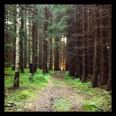 Vissa dagar börjar bättre än andra. En löptur där jag får se (sol)ljuset i tunneln hör absolut till de bättre. #nöjd (TinaOo) Tags: morning sun sol square forrest running squareformat skog hefe morgon springa löpning iphoneography instagramapp uploaded:by=instagram