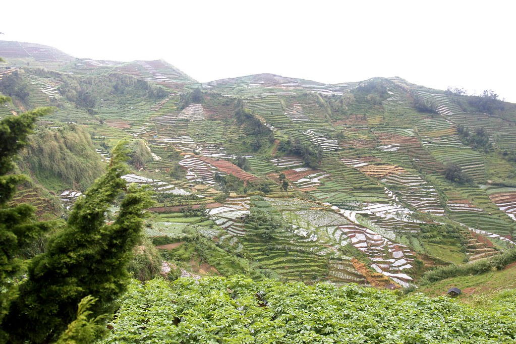 Terraced valleys, Dieng Plateau, Central Java, Indonesia