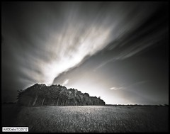 Sun rise in Lambton County (DelioTO) Tags: wood ontario canada landscape blackwhite trails panoramic pinhole september 4x5 f250 r25a fp4125 autaut ro9