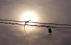 *** (wootri) Tags: life light sunset summer sky sun lizard wires