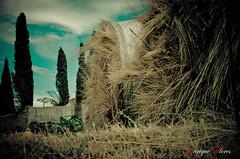 Do not disturb, please (Enrique Flores 71) Tags: blue trees sky espaa naturaleza tree nature field azul clouds rural arbol spain arboles village pueblo straw cielo nubes campo rest cypress catalunya paja catalua descanso cipres espanya balesofstraw balasdepaja mygearandme peremea