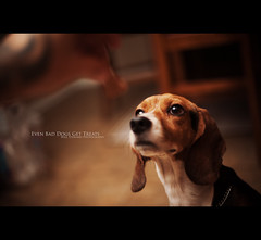07:50 Even Bad Dogs Get Treats (Will (Certified Ninja)) Tags: dog beagle kitchen tattoo canon puppy 50mm hand indiana sit treat roscoe evansville ef50mmf14usm strobist project50 5dmarkii 5d2 5dmkii wwwwillstewardphotographycom