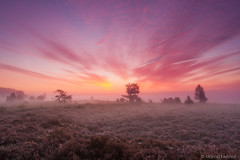 MK_120923_0115 (Marcel Kerkhof) Tags: morning autumn light red sky cloud sun sunlight mist plant tree nature netherlands beautiful fog sunrise landscape dawn quercus purple bright outdoor heather stunning awe drenthe heathland balloerveld balloo ericatetralix