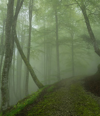 Path to Nirvana III (Ahio) Tags: tree green nature leaves fog forest spring asturias beech fagussylvatica smcpentaxfa31mmf18allimited riofabar pentaxk5 montesdelinfierno